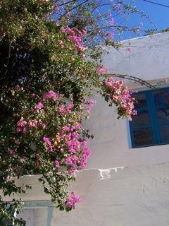 Bougainvillées Paros