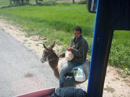 marchand d'oeufs sur son âne